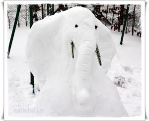 elefant100